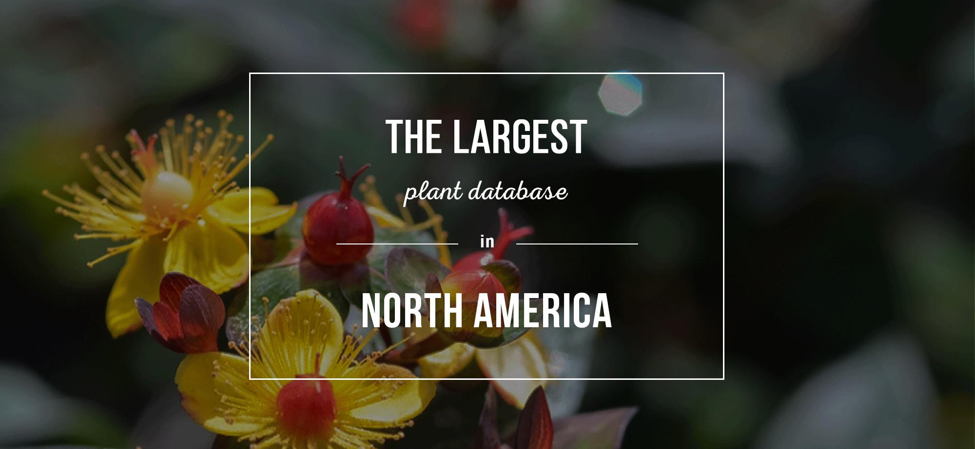 World Plants