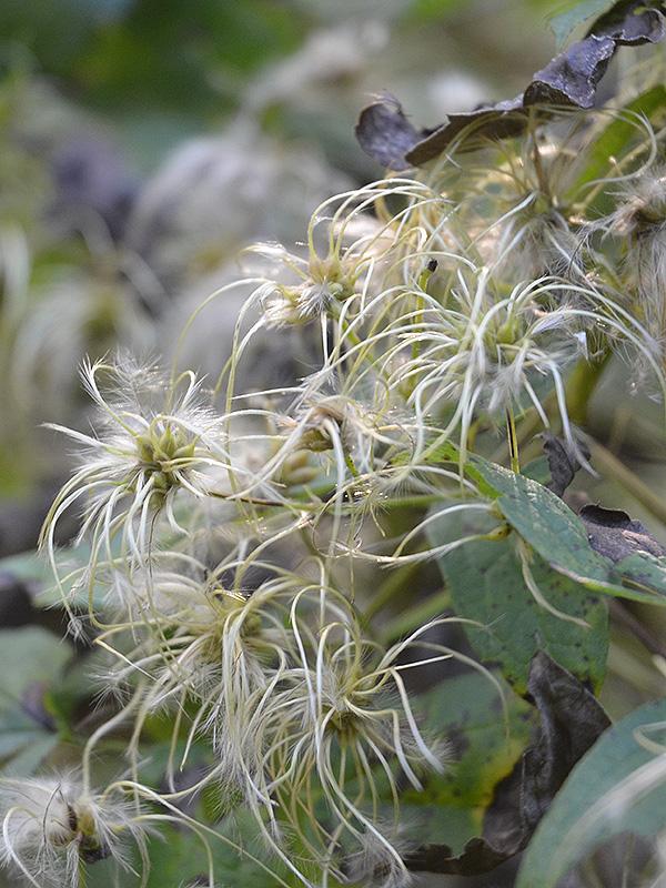 The Rarest Plants On Earth - WorldAtlas.com