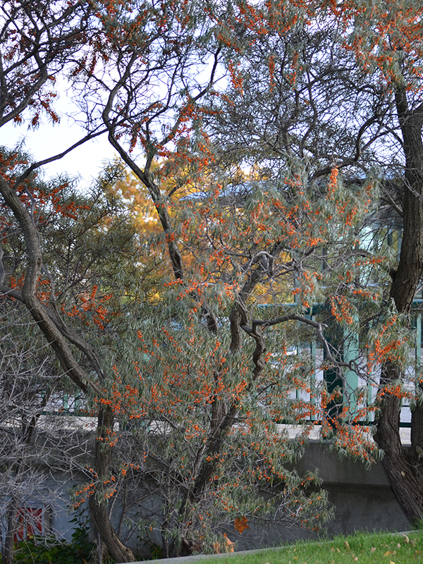 Something also mature tree nursery ontario matchless theme