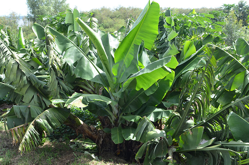 Home - Plant World